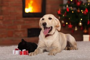Groton Animal Foundation wish list for shelter pets.