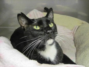 Loverboy-cat rescue in Groton CT