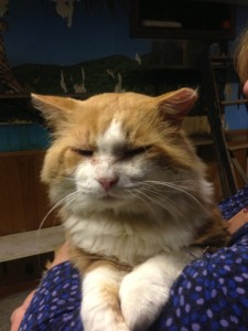 Oscar needs a home.  Call Barbara  at (860) 608-7206 for details.