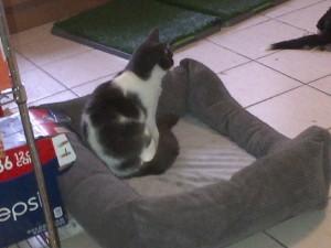 missing cat photo